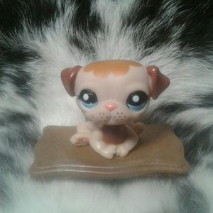 Littlest Pet Shop  #1753 Pug